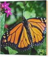 Monarch Danaus Plexippus Wood Print