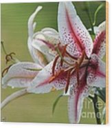 Oriental Lily Named Tiger Edition Wood Print