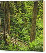 Path In Temperate Rainforest Wood Print by Elena Elisseeva