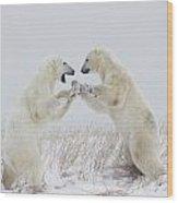 Polar Bears Play Fighting Along The Wood Print