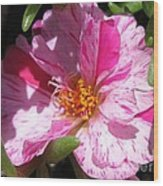 Portulaca Named Sundial Peppermint Wood Print