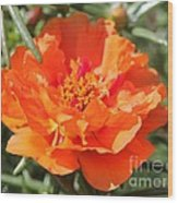Portulaca Named Sundial Tangerine Wood Print