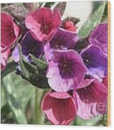 Pulmonaria Named Raspberry Splash Wood Print