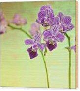 Purple Orchid-8 Wood Print