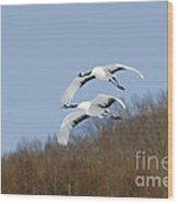 Red-crowned Cranes Wood Print