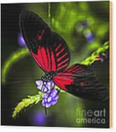 Red Heliconius Dora Butterfly Wood Print
