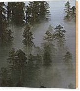 Redwood Creek Overlook With Giant Redwoods Sticking Out Above Lo Wood Print