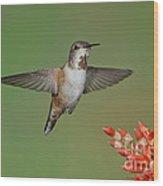Rufous Hummingbird Wood Print