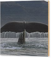 Sperm Whale Tail New Zealand Wood Print
