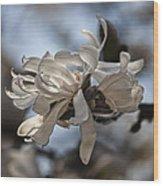 Spring April 2013 Magnolia Blossoms Wood Print