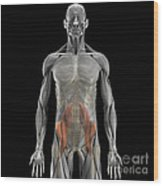 The Psoas Muscles Wood Print