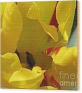 Triumph Tulip Named Washington Wood Print
