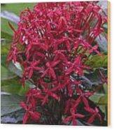 Tropical Flower Wood Print