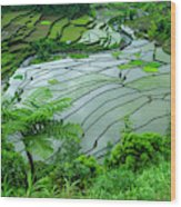 Unesco World Heritage Site, Rice Wood Print