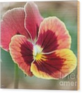 Viola Named Penny Red Blotch Wood Print