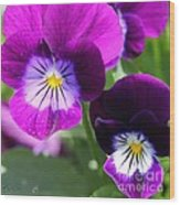 Viola Named Sorbet Plum Velvet Jump-up Wood Print