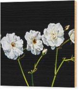 5 White Roses On Black Wood Print
