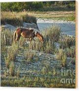 Wild Spanish Mustang Wood Print