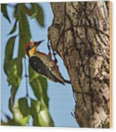 Yellow-fronted Woodpecker  Melanerpes Wood Print