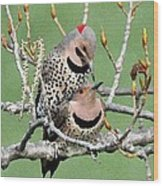 Yellow-shafted Northern Flickers Wood Print