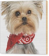 Yorkshire Terrier Dog Wood Print