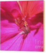 Zonal Geranium Named Tango Neon Purple Wood Print