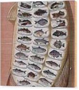 50 Fish From American Waters Wood Print by Georgia Fowler