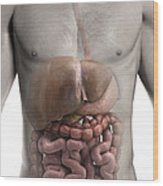 The Digestive System Wood Print