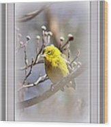 5393-006 - Pine Warbler-fb Wood Print