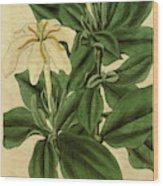 Botanical Print By Sir William Jackson Hooker Wood Print