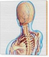 Upper Body Anatomy Wood Print