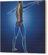 3d Medical Man With Skeleton Wood Print by Kirsty Pargeter