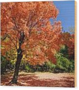 A Blanket Of Fall Colors Wood Print