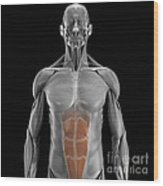 Abdominal Muscles Wood Print