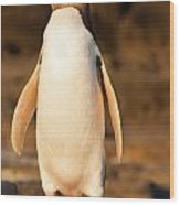 Adult Nz Yellow-eyed Penguin Or Hoiho On Shore Wood Print