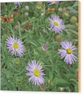 6 Asters Left Wood Print