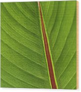 Banana Leaf Wood Print