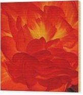 Begonia Named Nonstop Apricot Wood Print