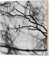 Bird In Tree Wood Print