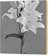 Black And White Beauty Wood Print