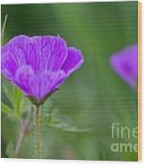 Bloody Geranium Wild Flower Wood Print