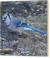 Blue Jay Wood Print