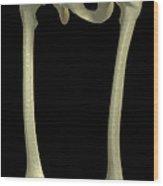 Bones Of The Upper Legs Wood Print