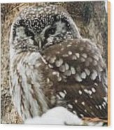 Boreal Owl Pictures Wood Print