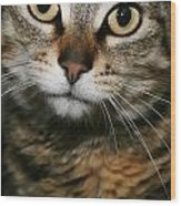 Brown Tabby Wood Print