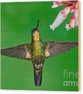 Buff-winged Starfrontlet Wood Print