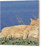 Cat In Hydra Island Wood Print