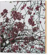 Cherry Blossoms In The Sky Wood Print