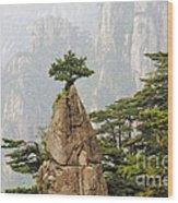 Chinese White Pine On Mt. Huangshan Wood Print