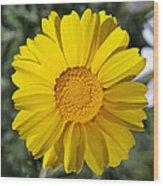 Crown Daisy Flower Wood Print